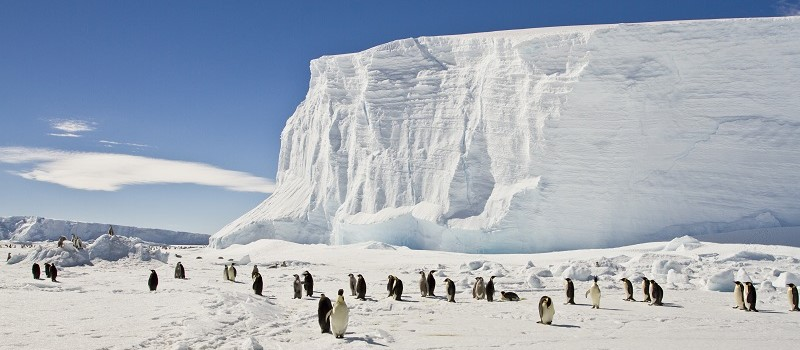Penguins Antarctica Tour