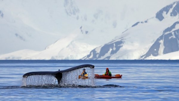 Observe whales in Antarctica