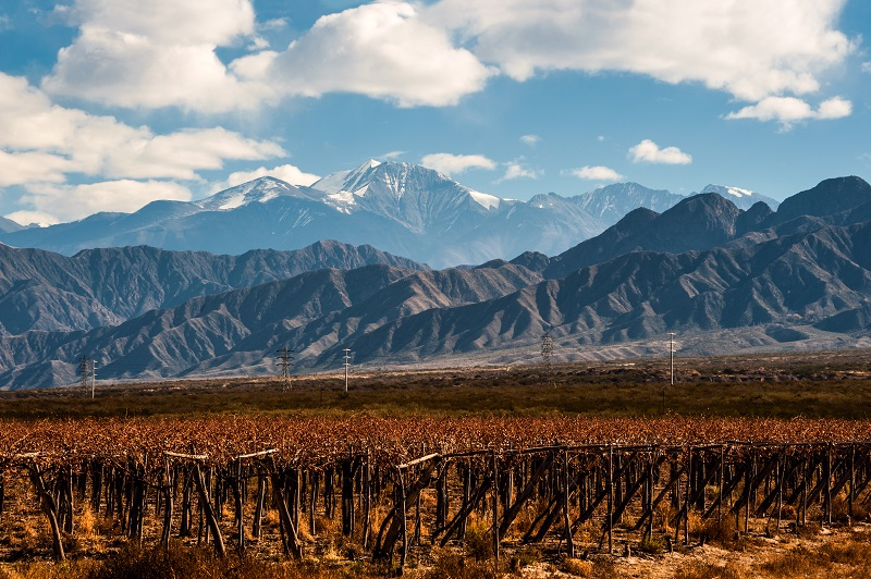 A vineyard surrounded by beautiful mountains